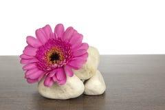 Högen av vit stenar utsmyckat med den rosa gerberaen royaltyfri bild