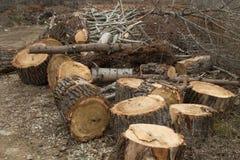Högg av träd Arkivfoto