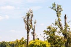 Högg av träd i parkera mot blå himmel Fotografering för Bildbyråer