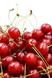 Högkörsbäret bär frukt på vit bakgrund Arkivbilder