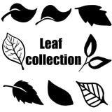 Högkvalitativ original- bladsamling på vit stock illustrationer
