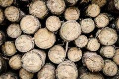 Höglager som träbakgrund Arkivfoto
