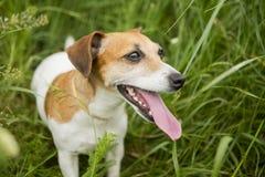 högland för jakt för lek för fågelhundepisod Royaltyfria Foton