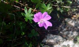 Höglandet blommar i den Hadjokh dalen Royaltyfri Bild