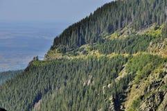 Höglandet klämmer fast skogsikt från överkant Arkivfoto