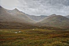 höglands- liggandeskott Arkivbild