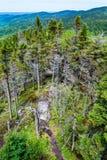 Höglands- skog i sommar Arkivfoto
