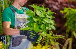 Högra blommor för trädgård royaltyfri bild