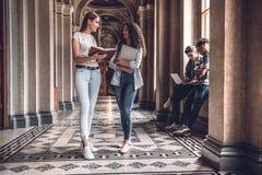 Högskolaliv Härliga studenter som tillsammans står och pratar på universitetkorridoren arkivbild