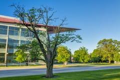 Högskolaskolabyggnad och gammalt träd Arkivfoton
