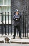 Högsta råttfångarekatt för Downing Street 10 Royaltyfria Bilder