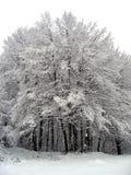 högsta skog arkivbilder