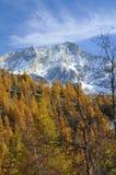 högt berg för cirrusskogglaciärer royaltyfri bild