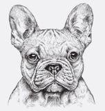 Högt detaljerad hand dragen vektorillustration för fransk bulldogg Arkivbilder