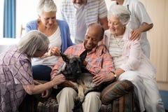 Högt folk och doktor som spelar med hunden royaltyfria foton