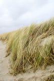 högt gräs Arkivfoto