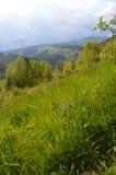 högt gräs Royaltyfria Foton