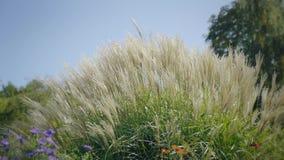 Högt gräs i vind Sida som skjutas på solnedgången Naturlig bakgrund med drömlik atmosfär stock video