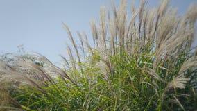 Högt gräs i vind Sida som skjutas på solnedgången Naturlig bakgrund med drömlik atmosfär arkivfilmer