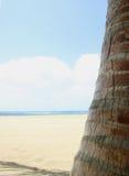 högt key tropiskt för strand Royaltyfria Bilder