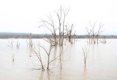 Högt nyckel- foto av sjön Nillahcootie, Victoria, Australien arkivfoto