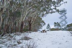 Högt observationstorn på Donna Buang för snöig montering scenisk utkik Arkivbild