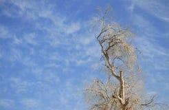 Högt träd i nedgången royaltyfri bild