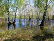Högt vatten för vår Fotografering för Bildbyråer