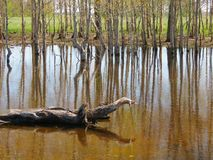 Högt vatten för vår Arkivbilder