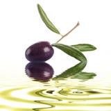 Högvärdig rå oliv på en vit bakgrund Fotografering för Bildbyråer