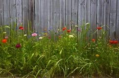 Högväxt blommaträdgård framme av det wood staketet Royaltyfri Foto