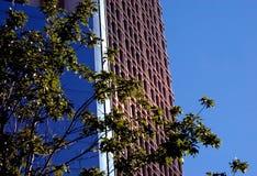 högväxt byggnadskontor Arkivbilder