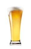 Högväxt exponeringsglas av ljust öl med skum royaltyfri fotografi