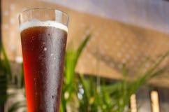 Högväxt exponeringsglas av rött öl Arkivbild