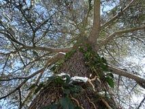 Högväxt Forest Tree perspektiv - himmel för jordning upp till Royaltyfria Foton