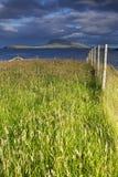 högväxt gräs Royaltyfria Bilder