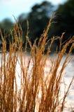 Högväxt gräs Royaltyfri Bild
