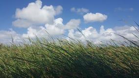 högväxt gräs Arkivbilder