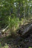 Högväxt gräs bredvid stupat träd arkivbilder