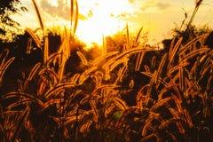 Högväxt gräs för äng Royaltyfria Foton