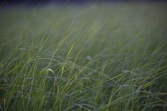 Högväxt gräs i en äng nära ett damm arkivbild