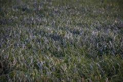 Högväxt gräs i en äng nära ett damm arkivbilder