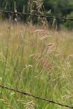 Högväxt gräs i ett landsfält Arkivbild