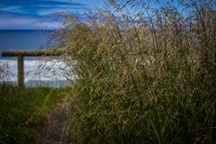 Högväxt gräs nära utkik över Stilla havet i udde Perpetua, Oregon Royaltyfri Fotografi