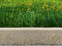 Högväxt gräs och maskrosor längs trottoarkanten arkivfoton