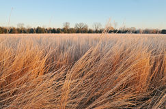 högväxt gräsprärie Arkivfoto
