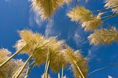 högväxt grässky arkivfoto