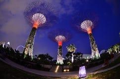 Högväxt jätte- tree Royaltyfri Bild