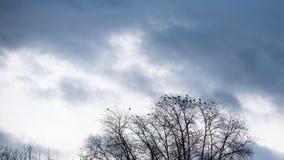 Högväxt kalt träd med många galanden som sitter på filialer arkivfoto