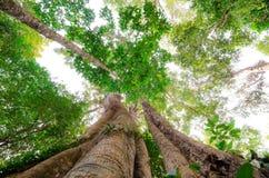 Högväxt träd Arkivfoton